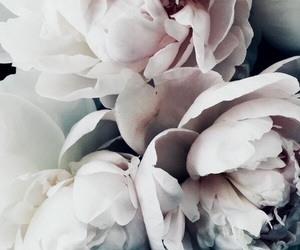 flowers, theme, and rp image