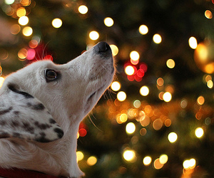 christmas, dog, and light image