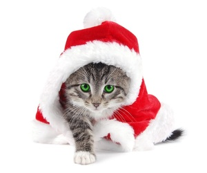 adorable, christmas, and cat image