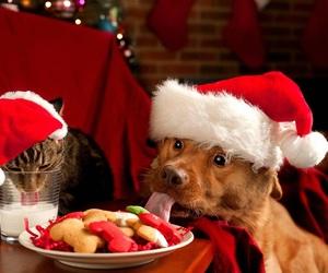 christmas, dog, and cat image
