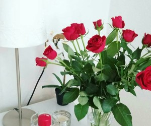 red, white, and rose image