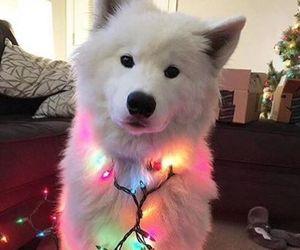 dog, christmas, and light image