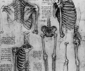 bones, skeleton, and black and white image