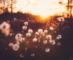 atardecer, flores, and flowers image