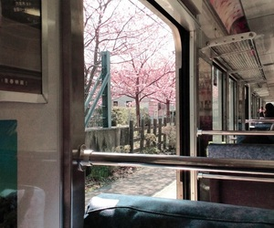japan, sakura, and train image