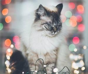 animal, kitten, and lights image