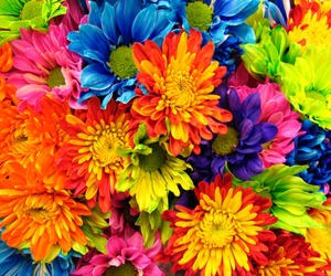 flowers, colorful, and colors image