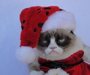 christmas, cat, and grumpy cat image