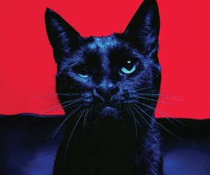 black, cat, and red image