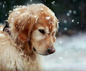dog, snow, and winter image