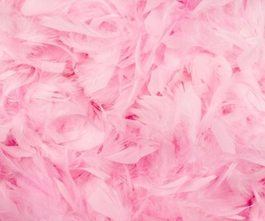 pink, feather, and background image