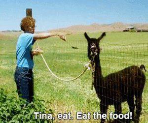 animal, food, and fucking funny image