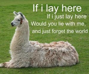 llama, funny, and snow patrol image