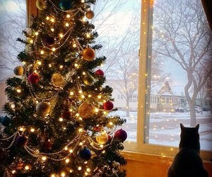 christmas, winter, and cat image