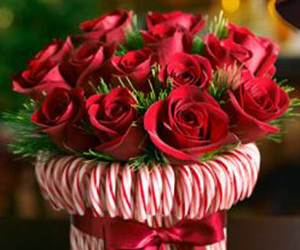 rose, christmas, and flowers image