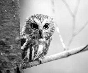 owl, cute, and animal image