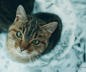 cat, cold, and eyes image