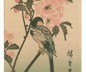 art, arte, and bird image