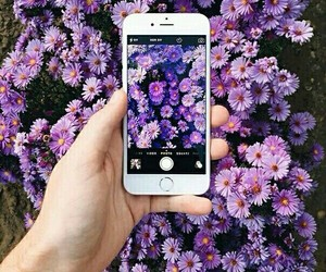 flowers, iphone, and purple image