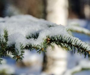christmas, cold, and nature image