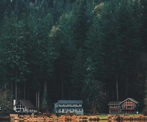 nature, forest, and house image