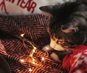 christmas, mignon, and chat image