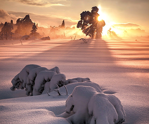 snow, sun, and winter image