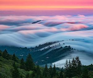 nature, fog, and landscape image
