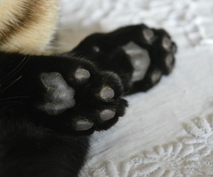 black, cat, and paws image