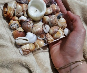 seashells candle cream image