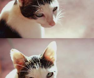 animal, kitten, and neko image