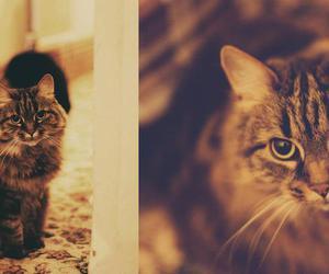 adorable, chat, and animal image