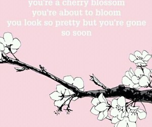 cherry blossom and quote image