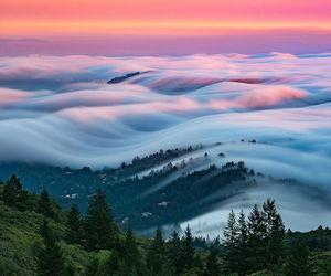nature, fog, and landscape image