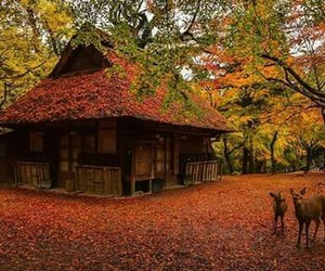 amazing, autumn, and colors image