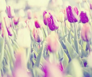 bokeh, flowers, and tulips image