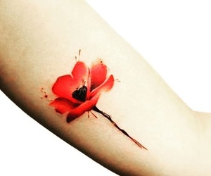 beauty, flower, and red image