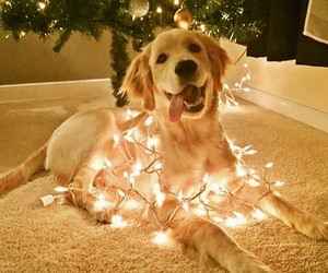 dog, christmas, and lights image
