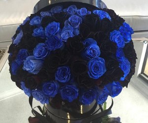 blue and roses image