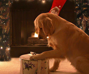 dog, christmas, and puppy image