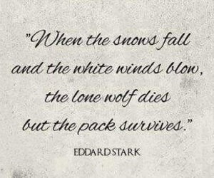 snow, stark, and survival image