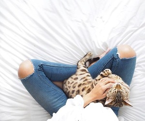 cat, animal, and jeans image
