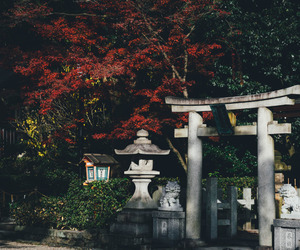 asia, autumn, and japan image