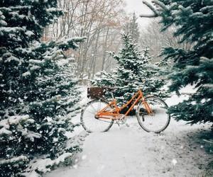 bicycle, bike, and christmas tree image