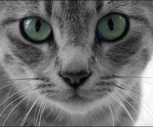 cat, green eyes, and kitty image