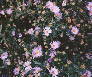 floral, nature, and iphone wallpaper image
