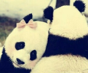 beautiful, panda, and tumblr image