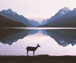 mountains, nature, and deer image