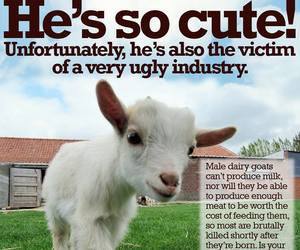 baby animals, dairy, and goats image