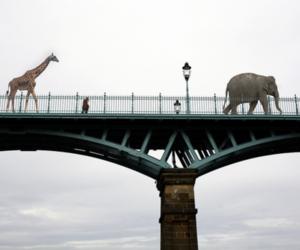 animals, giraffe, and bridge image